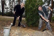 BOROVICE FEJKOVA. Ředitel zoo v pondělí zasadil vzácnou borovici Bungeho (Pinus bungeana) spolu se šéfem botanické zahrady Oldřichem Vackem (vpravo).