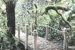 Botanická zahrada - proměna horské části skleníku Fata Morgana - kmen.