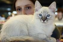 Mezinárodní výstava ušlechtilých koček v Kongresovém centru.