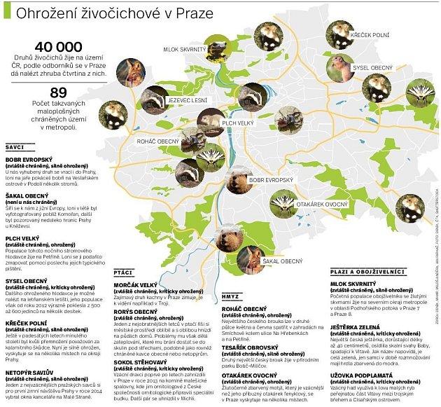 Chráněná zvířata vPraze. Infografika.