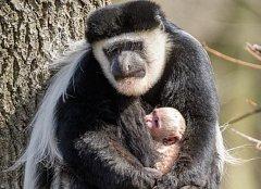 Zasloužilé matce Lucii se narodilo v pořadí již deváté mládě.