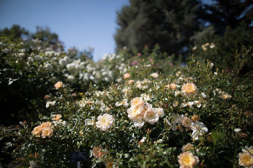 Květiny v pražské botanické zahradě.