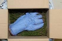 Balík obsahoval cosi, co vypadalo jako useknutá lidská ruka v gumové rukavici, podložená a překrytá dvěma kusy zeminy s mechem.