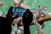 Tisíce lidí navštívili 6. července pražskou zoo. Levhart