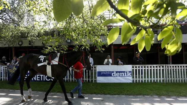Dostihy na závodišti ve Velké Chuchli v neděli 1. června 2014.