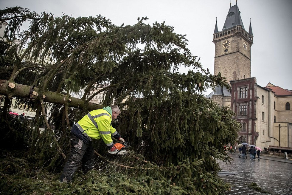 Kácení vánočního smrku na pražském Staroměstském náměstí v roce 2020.