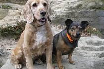 Bára a Fébinka, patří k sobě. Jsou sice dvě, ale od narození spolu, takže se spojili vlastně v jednoho mazlíčka. V úžasnou jednotku dělající pouze radost