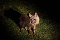 Pražská zoo láká na noční prohlídky
