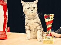 Miss kočka 2015: Belinda vyhrála s velkým náskokem hlavní cenu hlasováním návštěvníkům.
