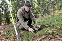 Lesníci letos na jaře vysázejí přes 133 nových stromů. Nejvíce v Běchovicích, Hodkovičkách a také v Chuchli. Ilustrační foto.