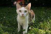 Miss kočka 2005 Adélka.