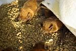 Záchranná stanice v Praze přijala za půl roku víc zvířat než loni.