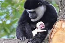 Samice Lucie se svým novým mládětem.