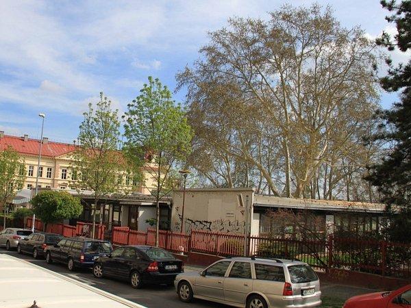 Platan vareálu Mateřské školy Kostelní vpražských Holešovicích ohrožuje děti, radnice diskutovala sobčany ojeho pokácení.