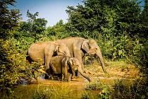 Vydejte se s Miladou Řehákovou poznat krásy Srí Lanky.