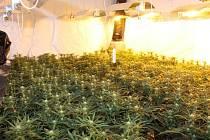 Jedna z největších pěstíren marihuany v regionu