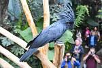 Zoo Praha a její Rákosův pavilon věnovaný vzácným exotickým papouškům