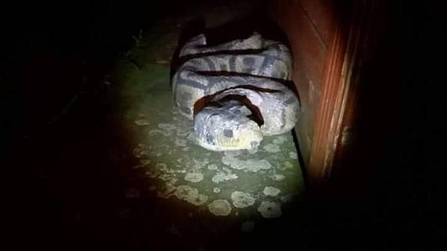 Ženu vyděsil had ze sádry.