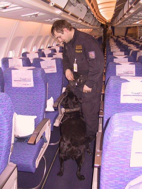Speciálně vycvičený pes prohledává prostory letadla.