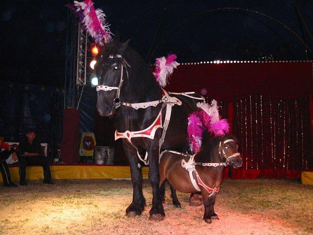 Cirkus Sultán