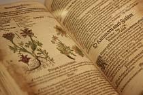Mattioliho herbář. Ilustrační foto.