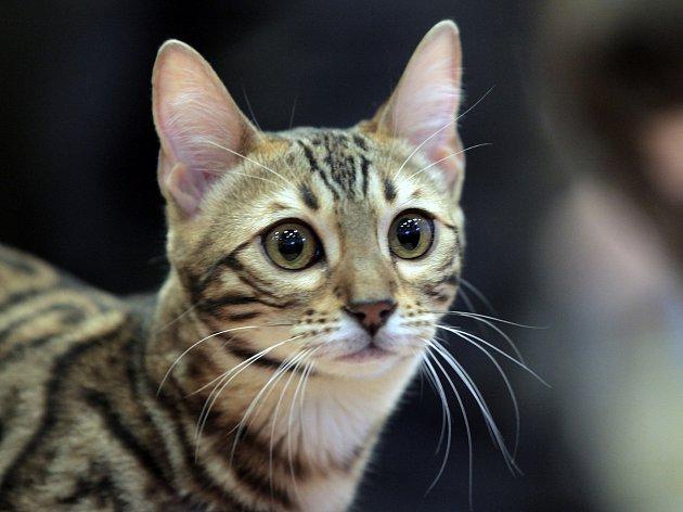 Dvoudenní mezinárodní výstava koček,kterou pořádalo Sdružení chovatelů koček. Hotel Diplomat 19.ledna