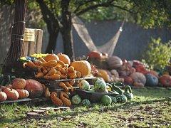Dýňový podzim v botanické zahradě v Troji.