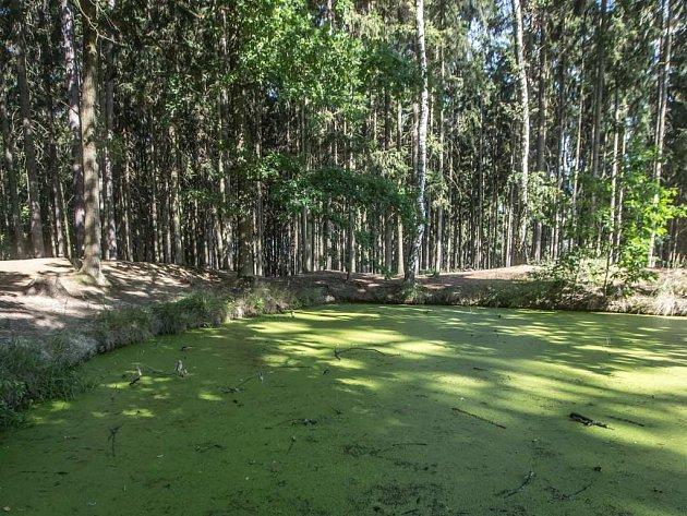 Krčský les.