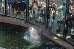 Hrající si lední medvěd zaujal návštěvníky.