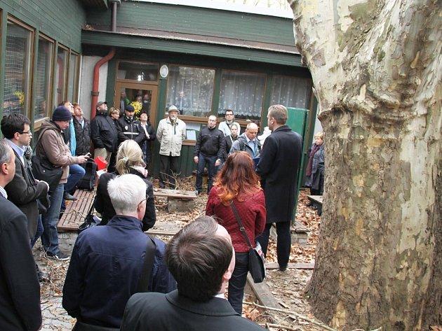 Platan v areálu Mateřské školy Kostelní v pražských Holešovicích ohrožuje děti, radnice diskutovala s občany o jeho pokácení.