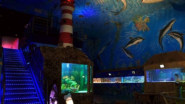 Mořský svět v pražských Holešovicích nabízí největší expozici mořských živočichů v České republice.