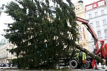 Odstraňování stromu na náměstí Republiky