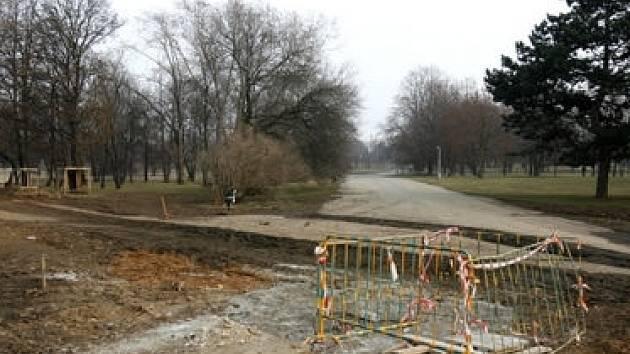 Rozhodnutí o kácení má nyní na stole odbor životního prostředí Městské části Praha 7. Jasno by mělo být podle úřadu v úterý 19. února.