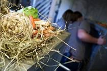 Z čeho všeho a jak se připravují krmiva pro zvířata v pražské zoologické zahradě?
