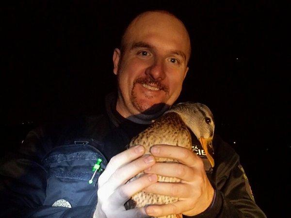 Strážníci zachránili divokou kachnu, která se zaklínila vpilíři mostní konstrukce vPraze 12.