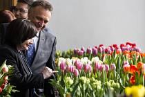 Z výstavy Tulipány a vázy na Pražském hradě.