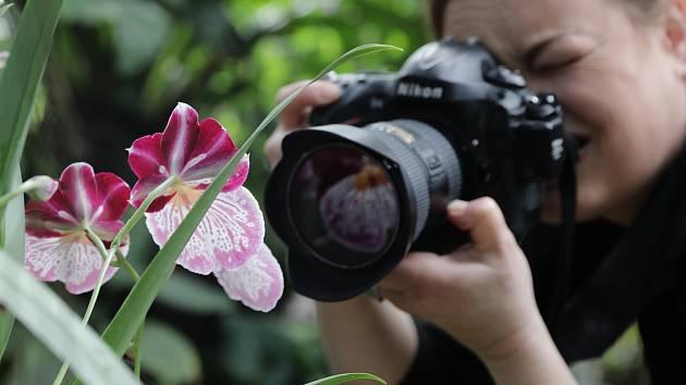 Zahájení výstavy orchidejí ve skleníku Fata Morgana.