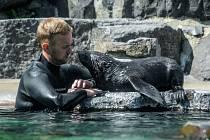 V Zoo Praha proběhne ve čtvrtek Výroční slavnost, její součástí budou také křtiny mláděte lachtana jihoafrického