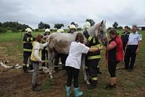 Taháním za ocas zachraňovali hasiči ze stanice na pražském Smíchově koně, který si zlomil nohu přímo ve stáji v Řeporyjích