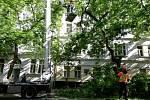 Stromořadí v Lužické ulici se kácet nebude. Magistrát ve spolupráci s městskou částí Praha 2 provedl testy stavu zeleně.