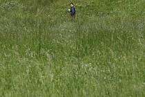 Vysoká tráva. Ilustrační foto.