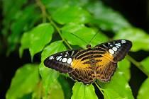 Výstava motýlů v botanické zahradě.