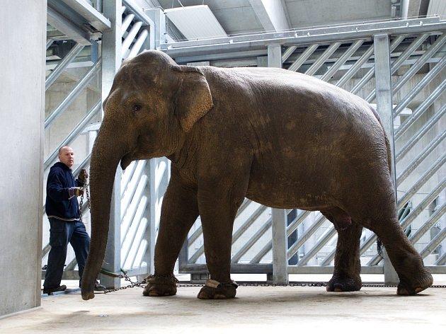 Shanti v novém sloninci.