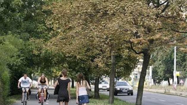 Uschlé stromy na cyklistické stezce u Podolské vodárny.