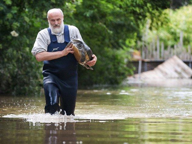 Rozvodněná řeka Vltava počátkem června roku 2013 zatopila spodní část zoologické zahrady v pražské Troji.