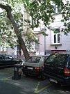 Vykácí městská firma jednu z nejkrásnějších alejí v Praze? Lužická bojuje o záchranu.