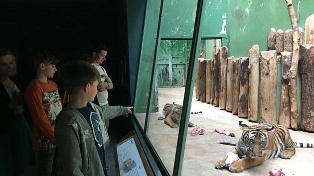 Mláďata v pražské zoo