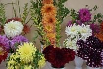 Každá žena zaslouží dostávat krásné květiny.