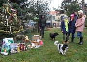 Vánoční strom pro psy v Heroldových sadech na Praze 10.