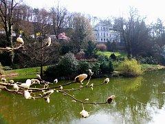 Nepříliš známá botanická zahrada se nachází v pražských Malešicích